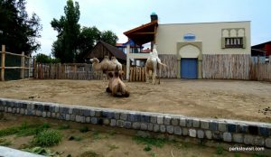 Budapest Zoo_092018 (33)