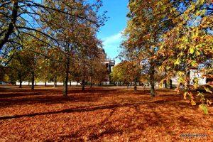 Park Sanssouci_Potsdam_09_2018 (55)
