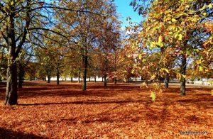 Park Sanssouci_Potsdam_09_2018 (57)
