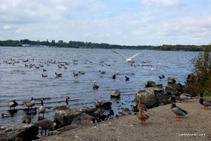 Pennington Flash Country Park_Wigan_092018 (1)