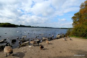 Pennington Flash Country Park_Wigan_092018 (2)