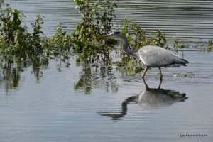 Pennington Flash Country Park_Wigan_092018 (30)