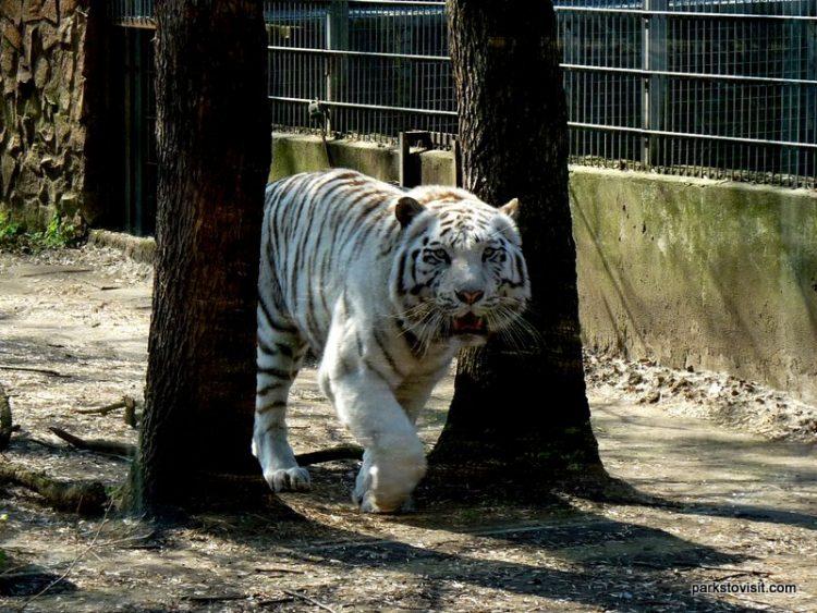Sóstó Zoo, Nyíregyháza