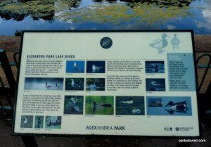 Alexandra park_Manchester_ 062019 (14)