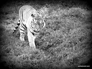 Yorkshire Wildlife Park_Doncaster_08_2019 (101)