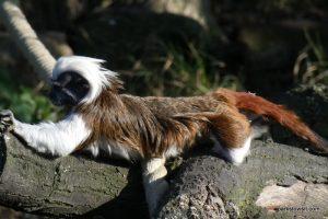 Yorkshire Wildlife Park_Doncaster_08_2019 (103)