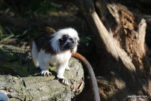 Yorkshire Wildlife Park_Doncaster_08_2019 (104)