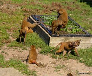 Yorkshire Wildlife Park_Doncaster_08_2019 (11)