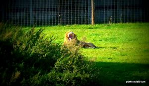 Yorkshire Wildlife Park_Doncaster_08_2019 (110)