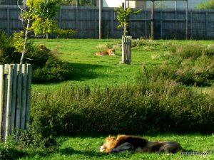 Yorkshire Wildlife Park_Doncaster_08_2019 (111)