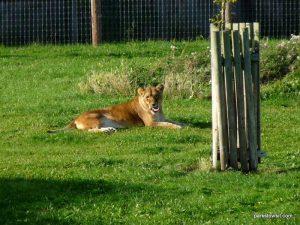 Yorkshire Wildlife Park_Doncaster_08_2019 (112)