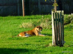 Yorkshire Wildlife Park_Doncaster_08_2019 (113)