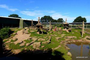 Yorkshire Wildlife Park_Doncaster_08_2019 (12)