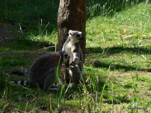 Yorkshire Wildlife Park_Doncaster_08_2019 (18)