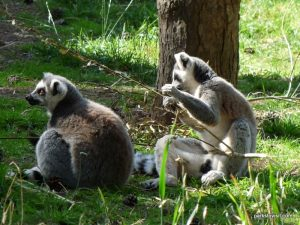 Yorkshire Wildlife Park_Doncaster_08_2019 (19)