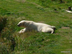 Yorkshire Wildlife Park_Doncaster_08_2019 (23)