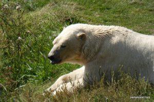 Yorkshire Wildlife Park_Doncaster_08_2019 (26)