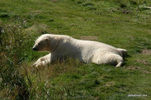 Yorkshire Wildlife Park_Doncaster_08_2019 (27)