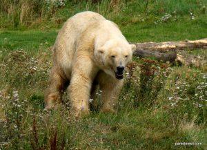 Yorkshire Wildlife Park_Doncaster_08_2019 (28)