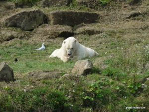Yorkshire Wildlife Park_Doncaster_08_2019 (29)