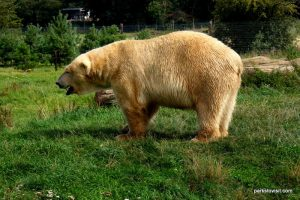 Yorkshire Wildlife Park_Doncaster_08_2019 (31)