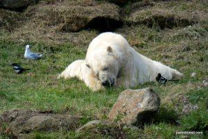 Yorkshire Wildlife Park_Doncaster_08_2019 (34)
