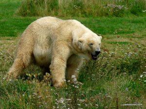 Yorkshire Wildlife Park_Doncaster_08_2019 (35)