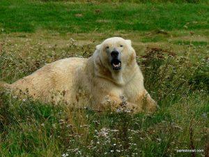 Yorkshire Wildlife Park_Doncaster_08_2019 (36)