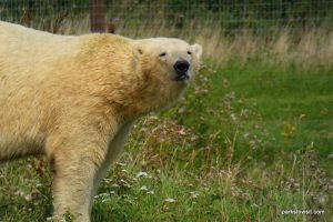 Yorkshire Wildlife Park_Doncaster_08_2019 (42)