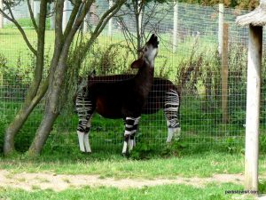 Yorkshire Wildlife Park_Doncaster_08_2019 (46)