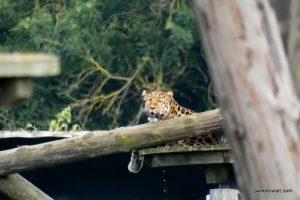 Yorkshire Wildlife Park_Doncaster_08_2019 (52)