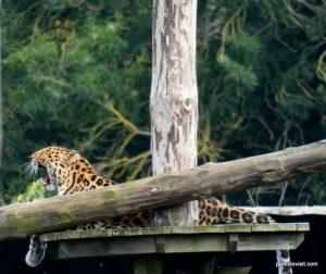 Yorkshire Wildlife Park_Doncaster_08_2019 (53)