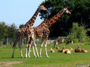 Yorkshire Wildlife Park_Doncaster_08_2019 (56)
