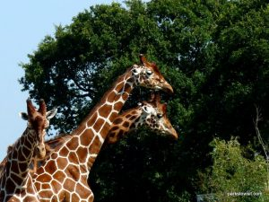 Yorkshire Wildlife Park_Doncaster_08_2019 (57)