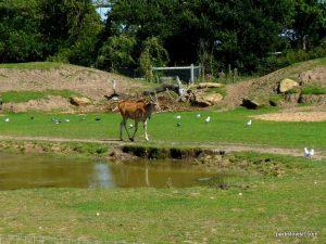 Yorkshire Wildlife Park_Doncaster_08_2019 (59)
