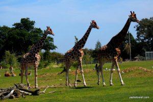 Yorkshire Wildlife Park_Doncaster_08_2019 (62)