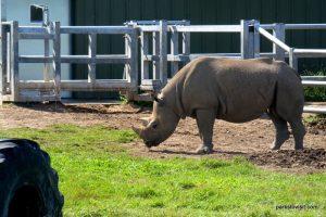 Yorkshire Wildlife Park_Doncaster_08_2019 (64)