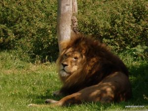 Yorkshire Wildlife Park_Doncaster_08_2019 (65)