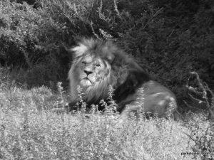 Yorkshire Wildlife Park_Doncaster_08_2019 (67)