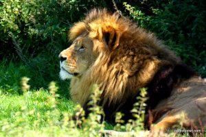 Yorkshire Wildlife Park_Doncaster_08_2019 (69)