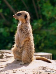 Yorkshire Wildlife Park_Doncaster_08_2019 (7)