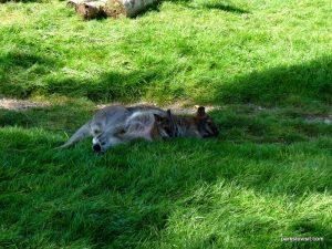 Yorkshire Wildlife Park_Doncaster_08_2019 (72)
