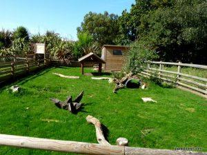 Yorkshire Wildlife Park_Doncaster_08_2019 (77)