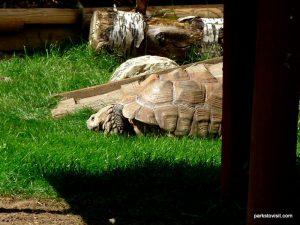 Yorkshire Wildlife Park_Doncaster_08_2019 (78)