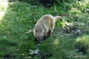 Yorkshire Wildlife Park_Doncaster_08_2019 (80)