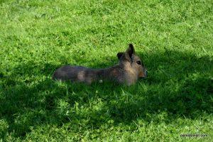 Yorkshire Wildlife Park_Doncaster_08_2019 (81)
