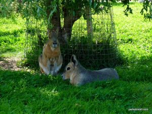 Yorkshire Wildlife Park_Doncaster_08_2019 (85)