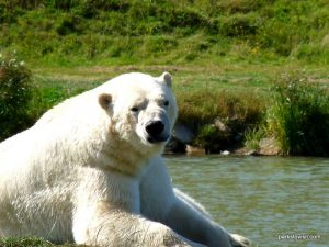 Yorkshire Wildlife Park_Doncaster_08_2019 (86)