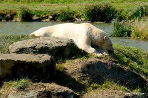 Yorkshire Wildlife Park_Doncaster_08_2019 (87)