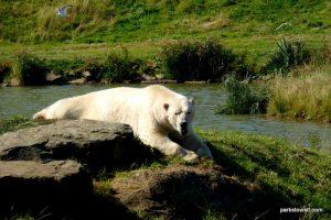 Yorkshire Wildlife Park_Doncaster_08_2019 (88)